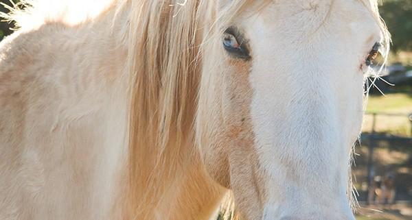 Touching a horse Calm Down